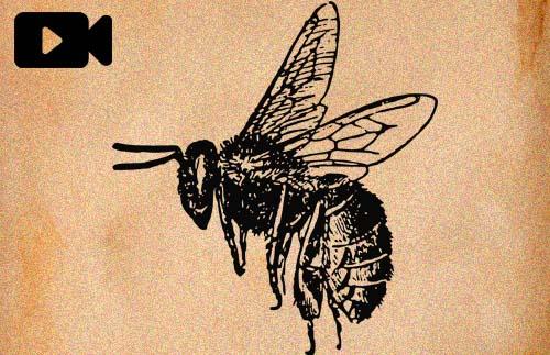 Videopodcast 30 - Abejas, miel y el apocalipsis