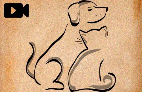 Videopodcast 38 - Mascotas y veganismo