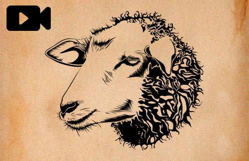 Videopodcast 49 - La verdad sobre la lana