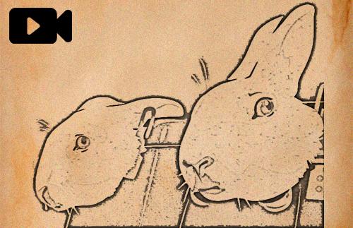 Videopodcast 53 - Experimentación animal